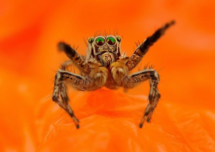 Discover the Beauty Of Spiders Through Microscopic Photographs-17