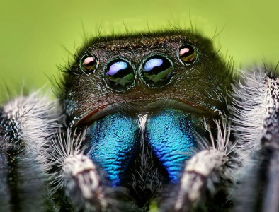 Discover the Beauty Of Spiders Through Microscopic Photographs-18