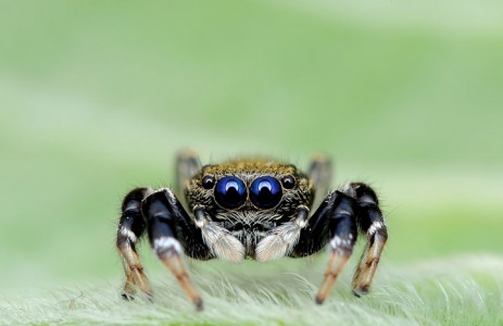 Discover the Beauty Of Spiders Through Microscopic Photographs-4