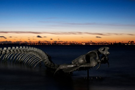 A Giant Aluminium Made Skeleton Of Serpent On the Beach of Loire, France-11