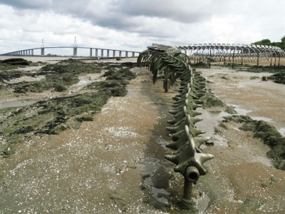 A Giant Aluminium Made Skeleton Of Serpent On the Beach of Loire, France-13