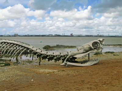 A Giant Aluminium Made Skeleton Of Serpent On the Beach of Loire, France-14