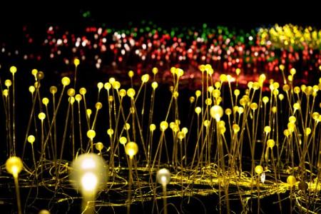 Enjoy A Walk Through The Lavish Garden Lights of Bruce-13