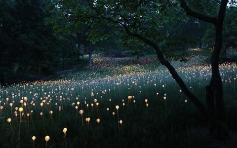 Enjoy A Walk Through The Lavish Garden Lights of Bruce-6