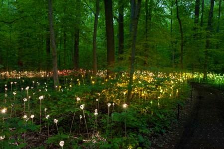Enjoy A Walk Through The Lavish Garden Lights of Bruce-8