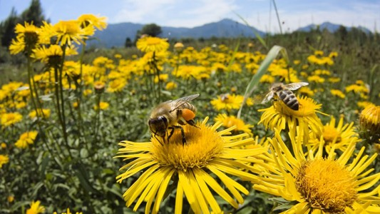 Scientists Respond To The Threat Of Disappearing Bees By Making Insect Robots For Cross Pollination -4