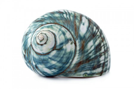 Inspired by Sea Shells, Canadian Researchers Make 200 Times Stronger Glass-