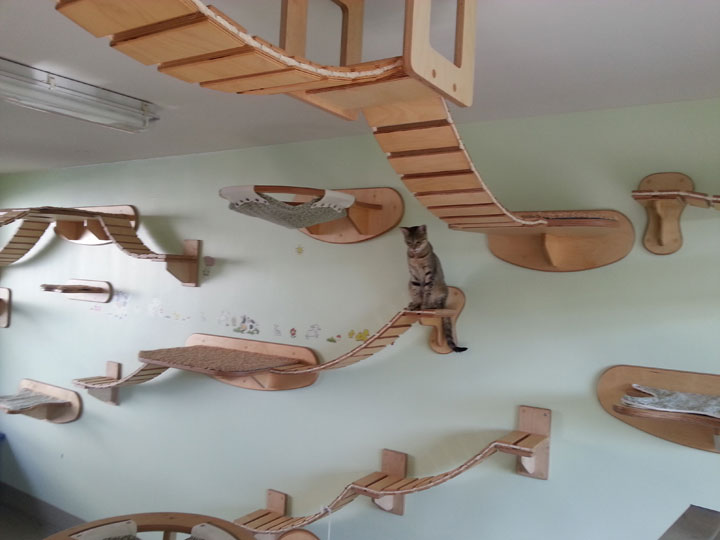 Furniture Designs To Make Your Apartment An Animal paradise-32