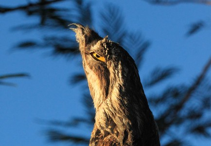 Discover Potoo, Only Bird That Can Camouflage Itself As A Branch-2