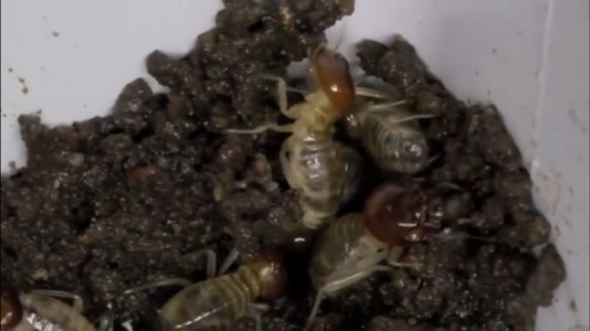 Harvard Scientists Take Inspiration From Termites To Make Fully Autonomous Builder Robots-2