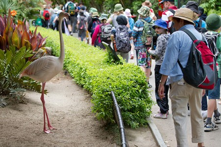 World's Oldest Living Flamingo Dies Aged 83 years, Adelaide, Australia-1