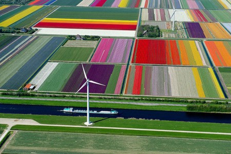 Celebrate The Arrival Of Spring With 15 Beautiful Flower Field Photos-1