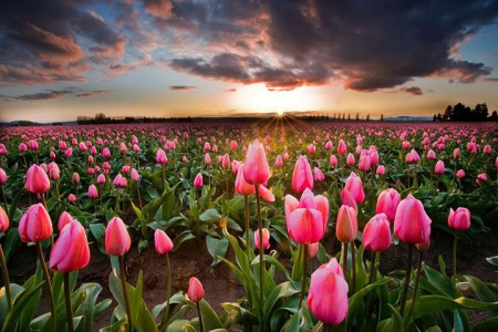 Celebrate The Arrival Of Spring With 15 Beautiful Flower Field Photos-12