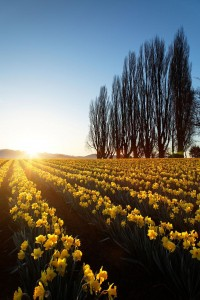 Celebrate The Arrival Of Spring With 15 Beautiful Flower Field Photos-14