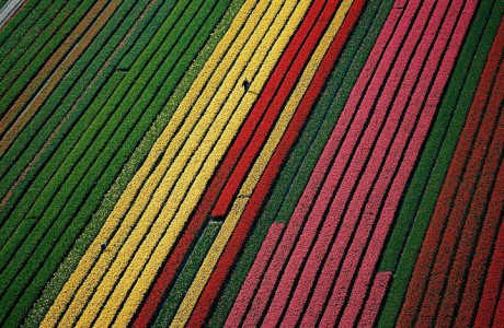 Celebrate The Arrival Of Spring With 15 Beautiful Flower Field Photos-2