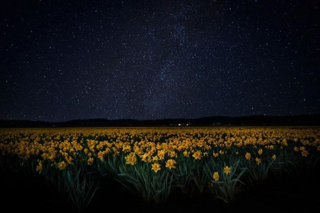Celebrate The Arrival Of Spring With 15 Beautiful Flower Field Photos-5