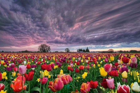 Celebrate The Arrival Of Spring With 15 Beautiful Flower Field Photos-6