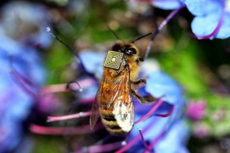 Scientists Study Bee Behaviour By Equipping Them With Electronic Sensors-