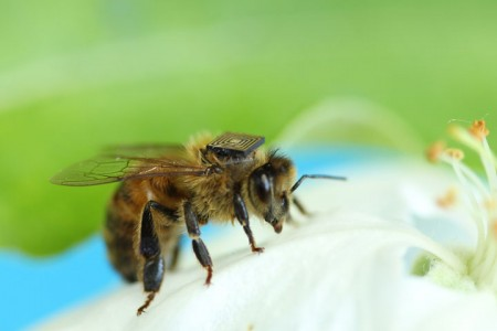 Scientists Study Bee Behaviour By Equipping Them With Electronic Sensors-1