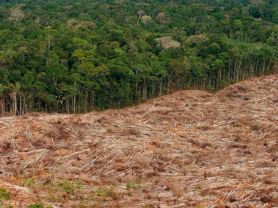 This Interactive World Map Reveals The Massive Deforestation Of Earth In Real Time-4