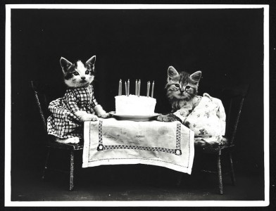 Old Is Gold-Amazing Cat Fashion From 1915 -1