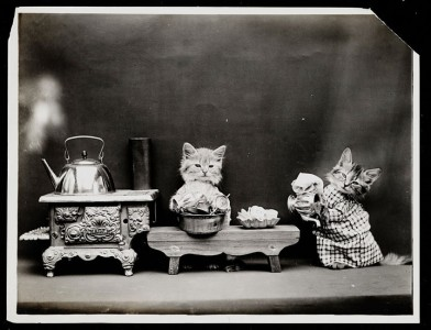 Old Is Gold-Amazing Cat Fashion From 1915 -10