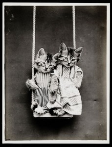 Old Is Gold-Amazing Cat Fashion From 1915 -11