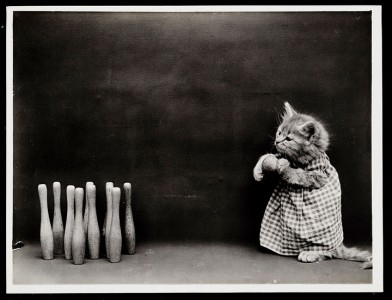 Old Is Gold-Amazing Cat Fashion From 1915 -13