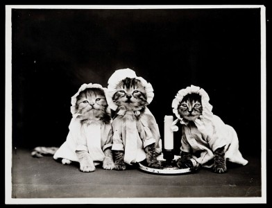 Old Is Gold-Amazing Cat Fashion From 1915 -19