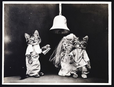Old Is Gold-Amazing Cat Fashion From 1915 -2