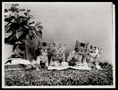 Old Is Gold-Amazing Cat Fashion From 1915 -8
