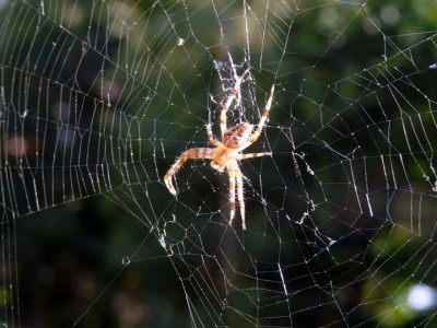 Scientists Have Finally Managed To Produce Synthetic Spider Silk-1