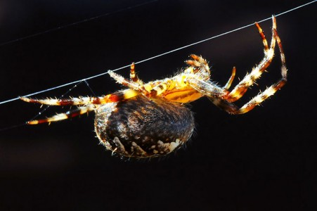 Scientists Have Finally Managed To Produce Synthetic Spider Silk-2