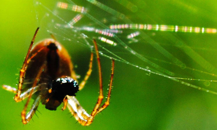 Scientists Have Finally Managed To Produce Synthetic Spider Silk-3