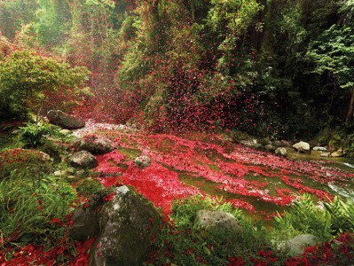 Amazing Spectacle 8000000 Flower Petals Falling On A Small Village-6