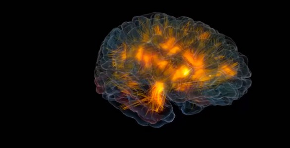 An Awesome 3D Modeling Reveals The Activity Of Human Brain-