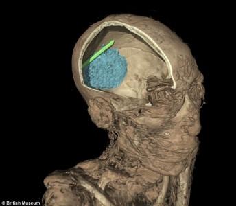 Skull of Mummie