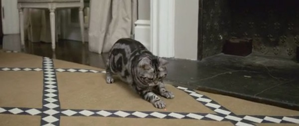 Missing Your Cat: Kittyo Lets You Play With Your Cat Using Remote Control-4