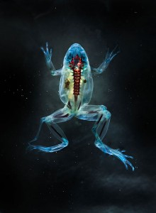 Reliquaries: Stunning Portraits Reveal Malformations In Frogs And Tadpoles-3