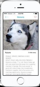 Barkbuddy app to find dogs