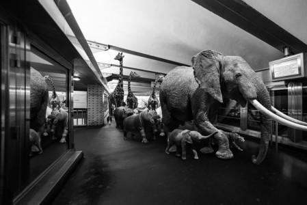 Animals Of Savannah In Paris Metro-