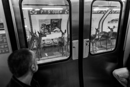 Animals Of Savannah In Paris Metro-10