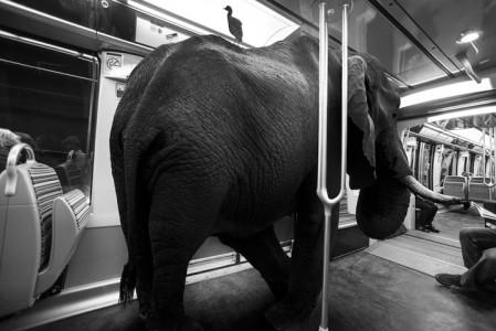 Animals Of Savannah In Paris Metro-3