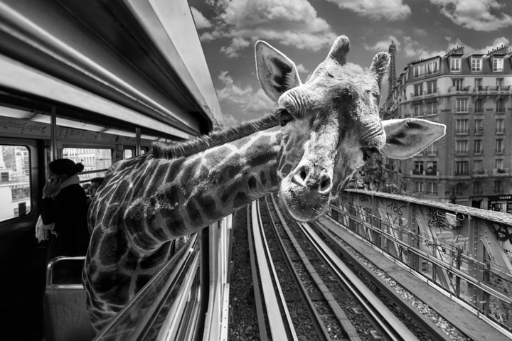 Animals Of Savannah In Paris Metro-4