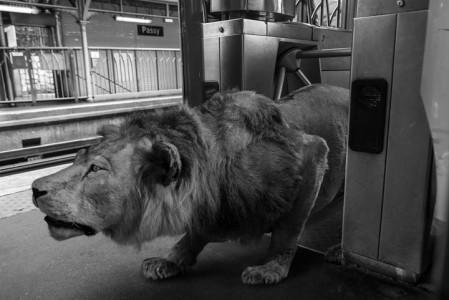 Animals Of Savannah In Paris Metro-8