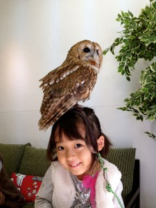 An Unusual Owl Bar Where You can Drink Coffee While Cuddling Owls-1