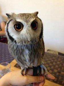 An Unusual Owl Bar Where You can Drink Coffee While Cuddling Owls-11