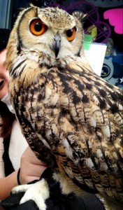 An Unusual Owl Bar Where You can Drink Coffee While Cuddling Owls-13