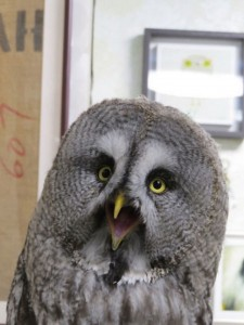 An Unusual Owl Bar Where You can Drink Coffee While Cuddling Owls-15