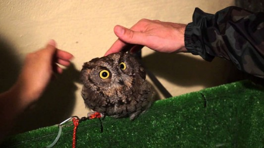 An Unusual Owl Bar Where You can Drink Coffee While Cuddling Owls-2